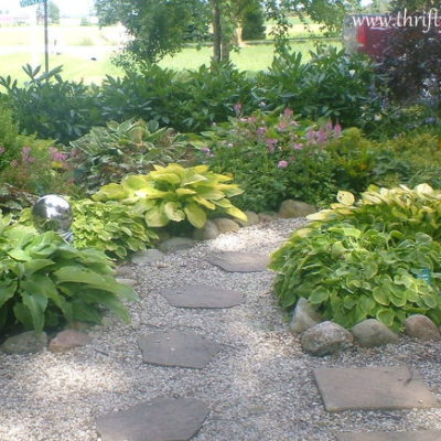 Cleaning up the Hostas