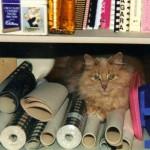 Saying Goodbye to a Feline Friend