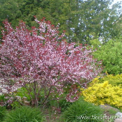 Around the Gardens in 80 Seconds – A Wordless Post