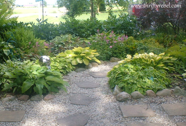 cleaning-up-the-hostas