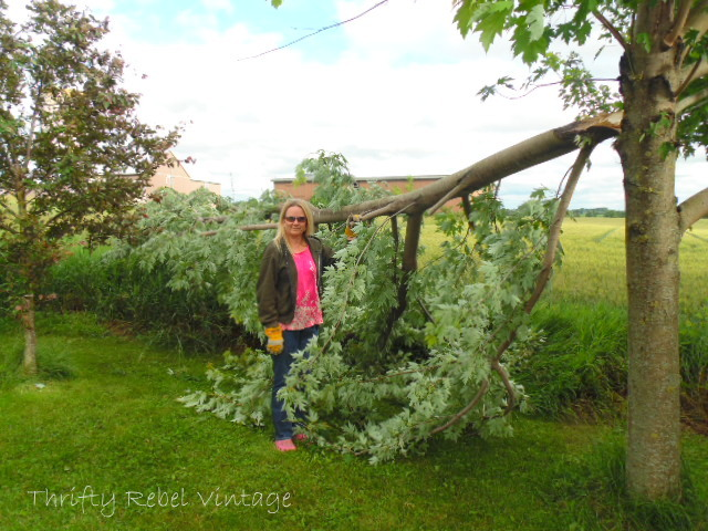 maple tree damaged by storm