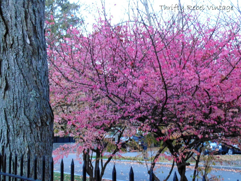 Cooperstown pink tree