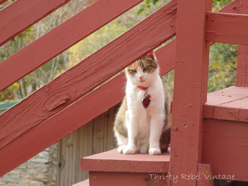 harpers ferry cat