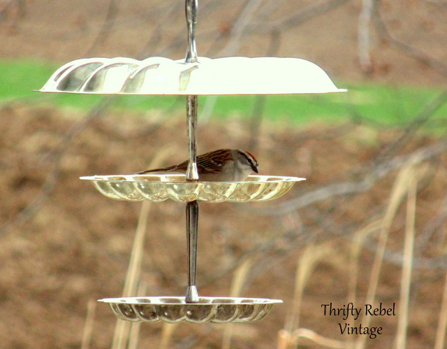 bird in tiered feeder 2