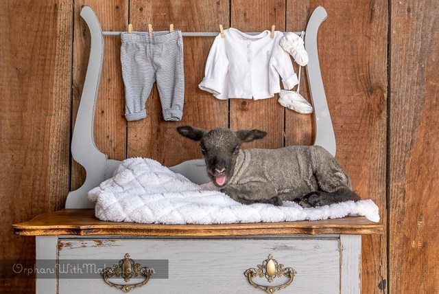 Oak dresser makeover with lamb by Orphans With Makeup 2