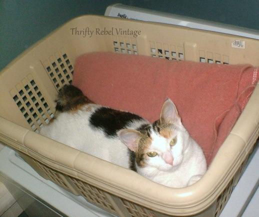 pixie-in-laundry-hamper