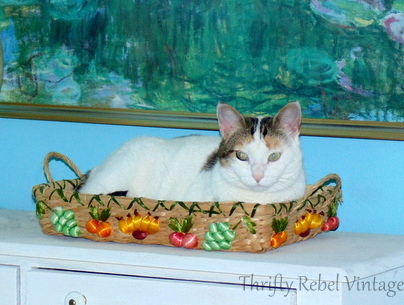 pixie-in-basket-march-2016
