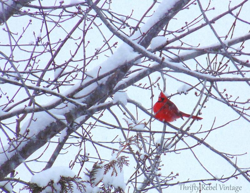 Cardinal on a snowy tree branch