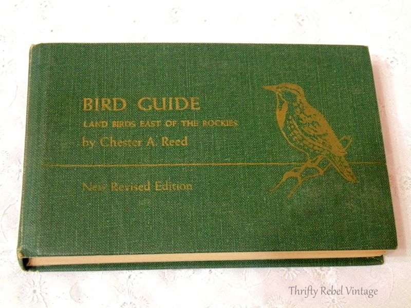 Bird Guide by Chester Read