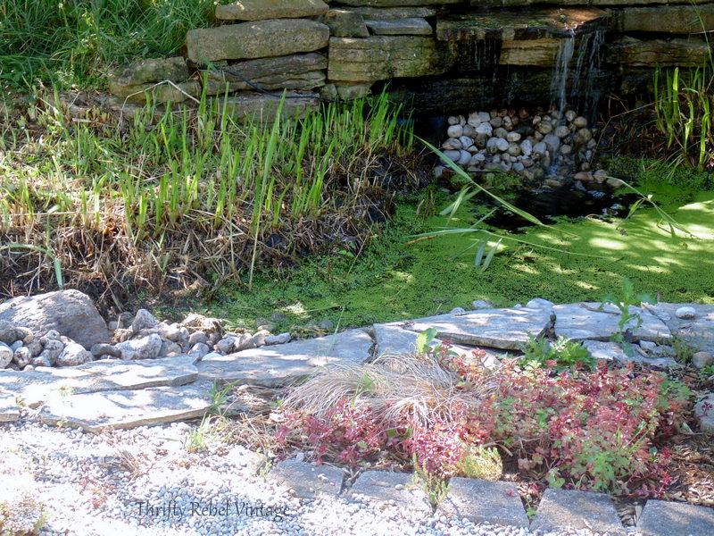 garden pond rescue restoration 5