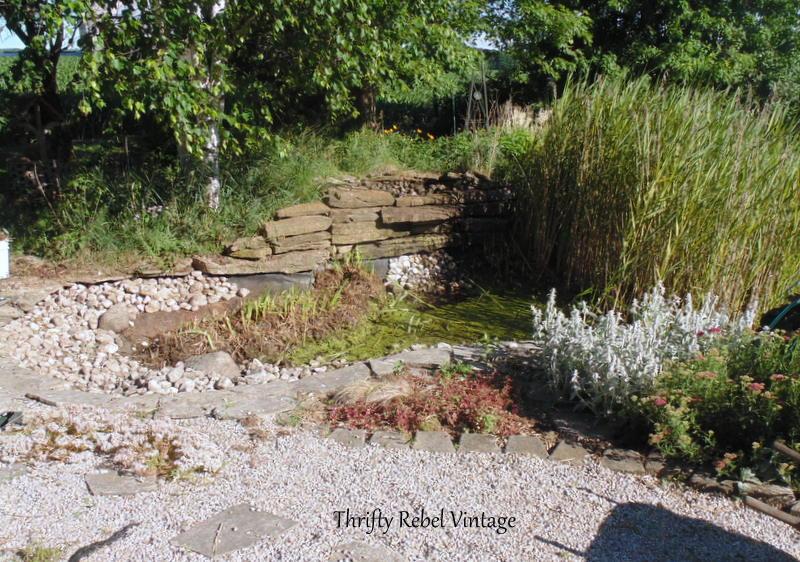 garden pond rescue restoration 7