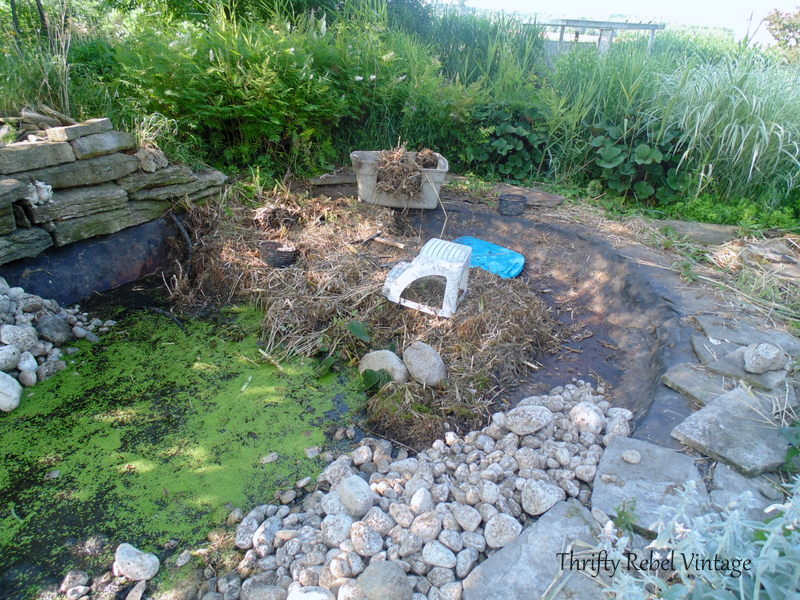 garden pond rescue restoration 91