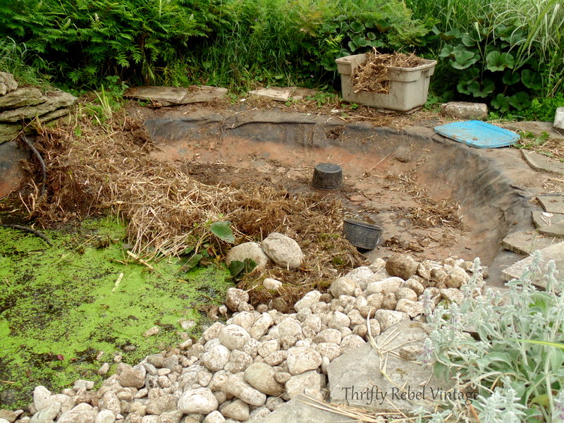 garden pond rescue restoration 93