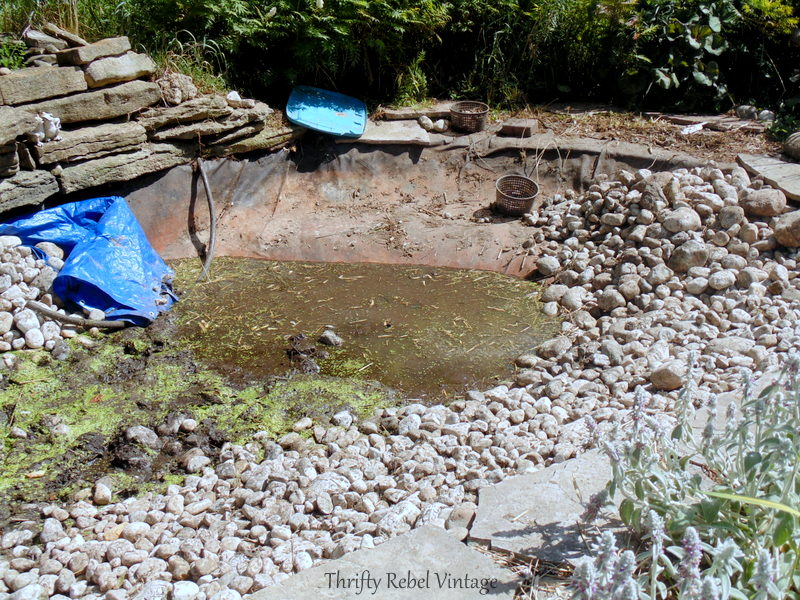 garden pond rescue restoration 95