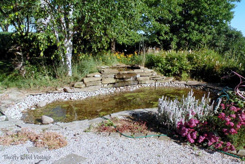 garden pond rescue restoration 97