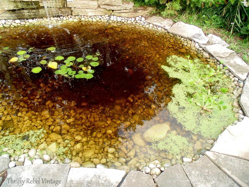 garden pond rescue restoration after 4