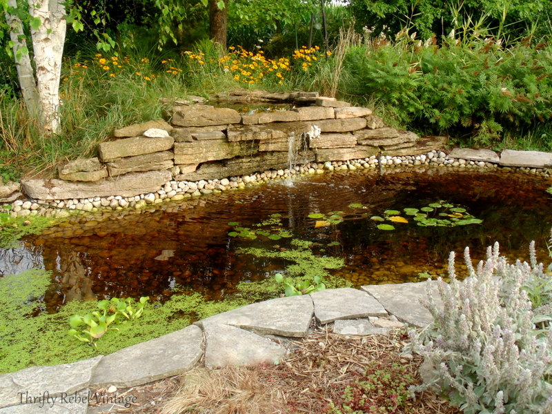 garden pond rescue restoration after 6