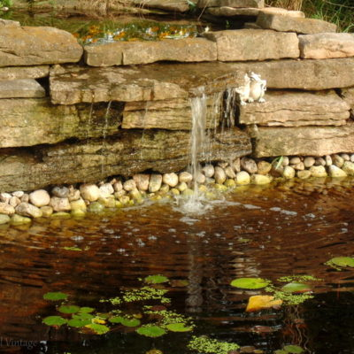 Our Garden Pond Rescue and Restoration