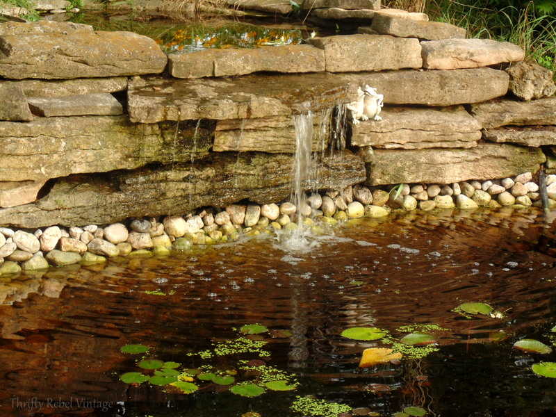 garden pond rescue restoration after 7