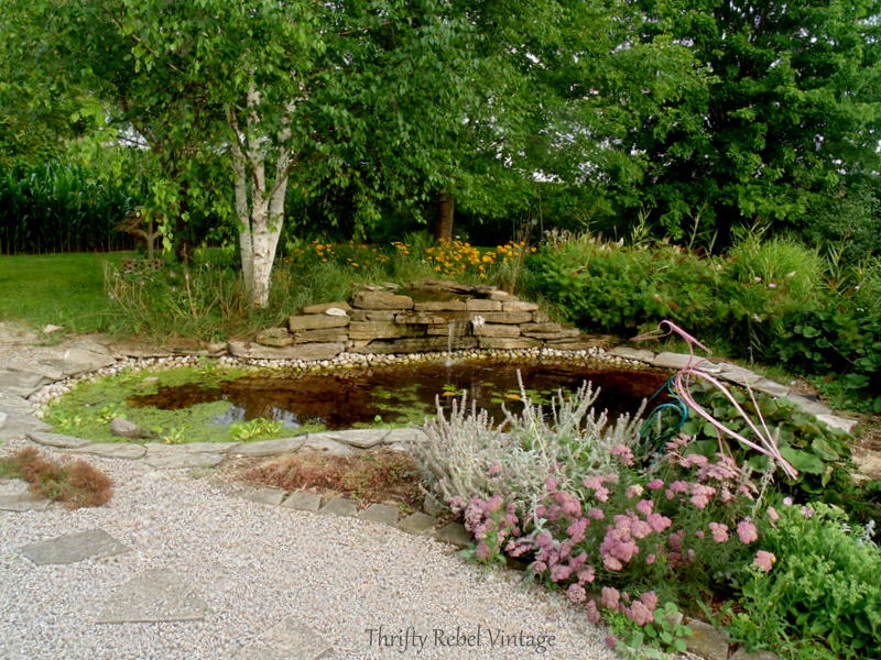 garden pond rescue restoration after
