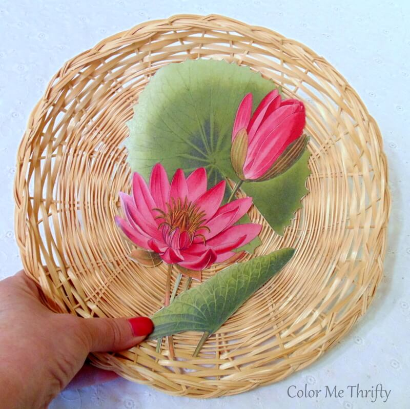 dry fit of vintage water lily graphic